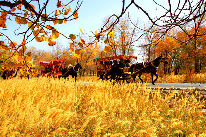镜头| 泽普县:深秋唯美的金色梦境