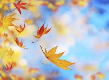 秋天的記憶