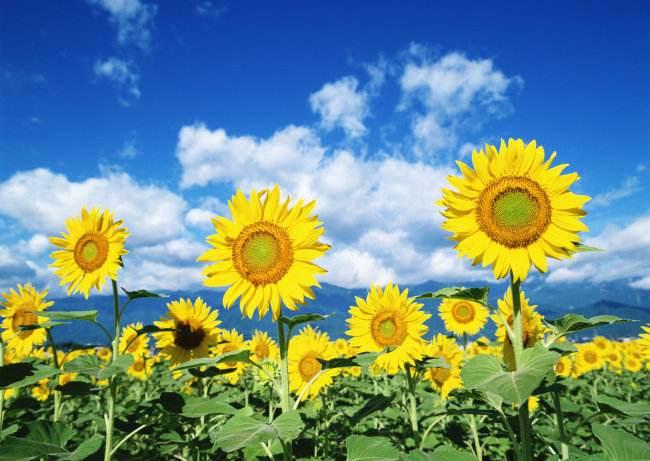 光芒四射的一朵军花——她从黄继光身边走来