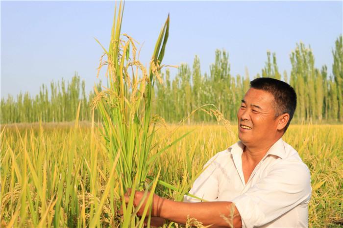 2.风吹稻浪,满眼金黄。博湖县的上千亩水稻进入丰收季,美丽的秋景洋溢着稻花香里说丰年的喜悦。(博湖县纪委监委  牛雨萌 摄).jpg